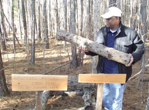 Thava Mahadevan holds up a log inoculated with shiitake spores, which will eventually produce the pricey mushrooms.
