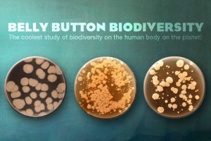 Photo of three petri dishes with bacteria. Publicity image from the Rob Dunn's Belly Button Biodiversity project.