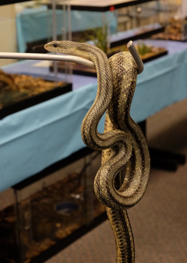 What is the cost of a small snake habitat?