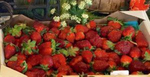 Strawberries on display at Carolina Country Fresh.