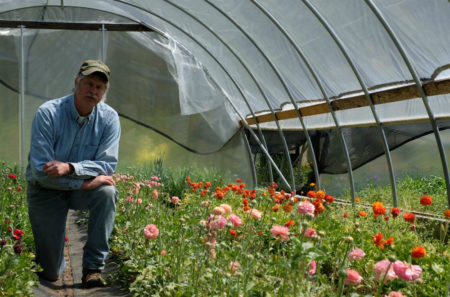 Alex kneels among a row of bright pink and orange flowers under a plastic hoop house.